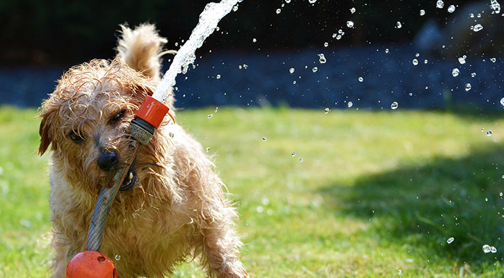 dog hose summer